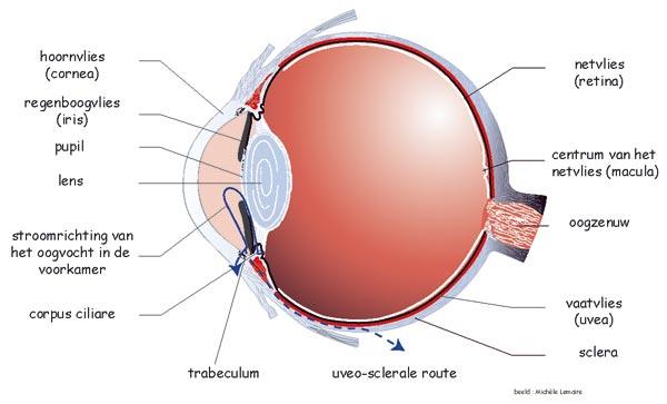 eye-en